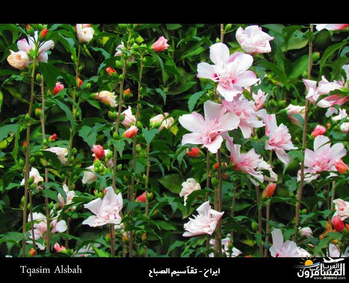 arabtrvl1434074187412.jpg