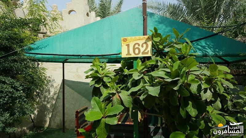 arabtrvl1539129718427.jpg