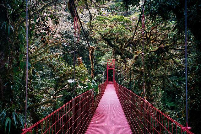 Monteverde-Cloud-Forest-Reserve.jpg