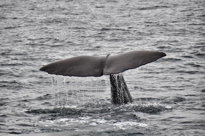 Whale-Watching-At-Kaikoura.jpg