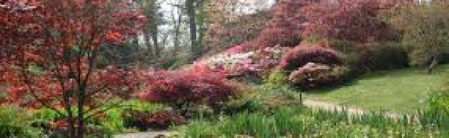New-Forest-Wedding-DJ-Photography-Exbury-Gardens-mobile.jpg