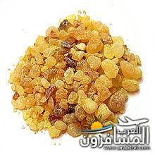 arabtrvl1453124503311.jpg