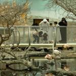 Center-for-Animals-Arabian-Peninsula-150x150.jpg