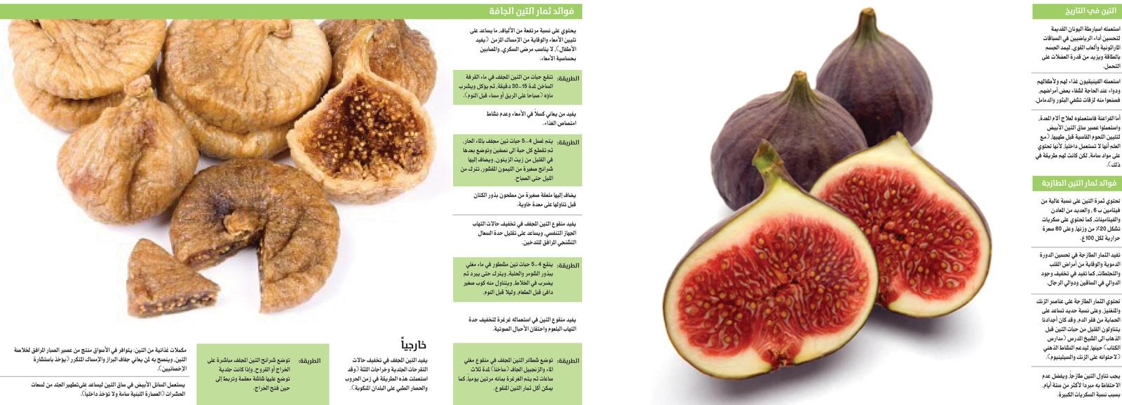 686604 المسافرون العرب التين ثمار مغذية.. وفيها منافــع للناس