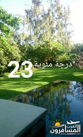 691813 المسافرون العرب جزيرة موريشيوس بلاد الأبتسامة والسكر