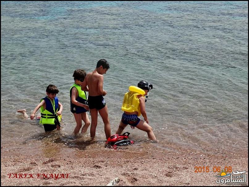 693357 المسافرون العرب رحلة غوص الى البحر الاحمر