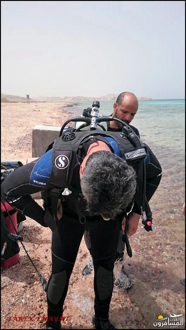 693391 المسافرون العرب رحلة غوص الى البحر الاحمر