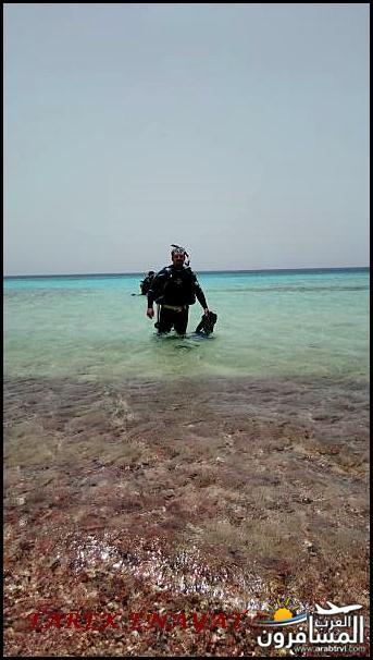 693392 المسافرون العرب رحلة غوص الى البحر الاحمر