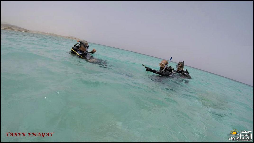 693395 المسافرون العرب رحلة غوص الى البحر الاحمر