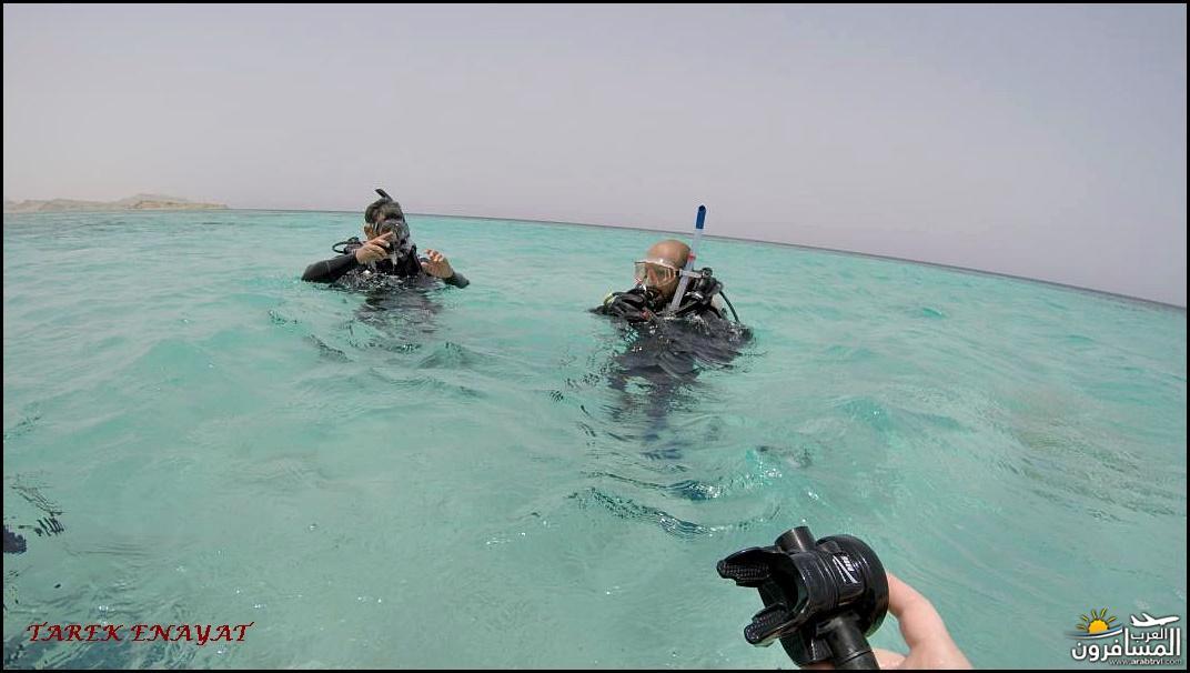 693396 المسافرون العرب رحلة غوص الى البحر الاحمر