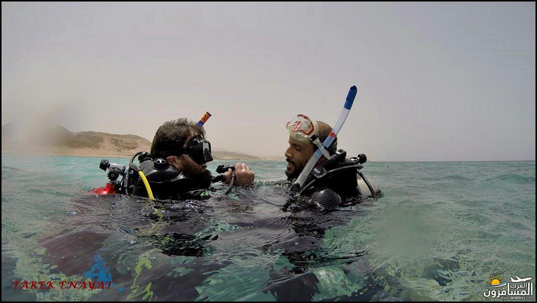 693419 المسافرون العرب رحلة غوص الى البحر الاحمر