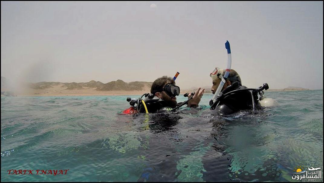 693420 المسافرون العرب رحلة غوص الى البحر الاحمر