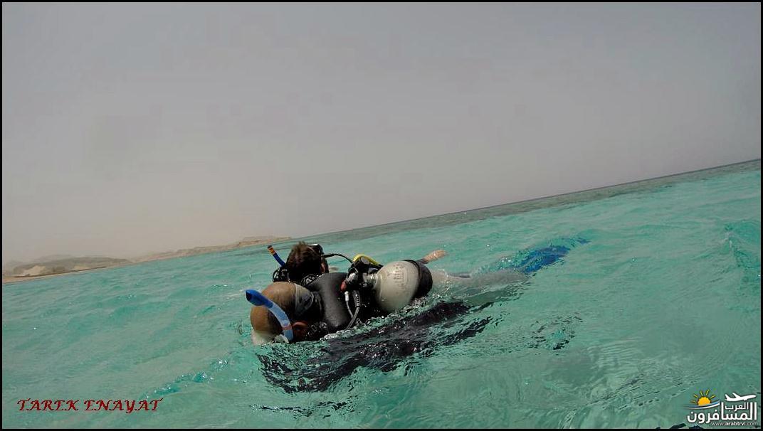 693421 المسافرون العرب رحلة غوص الى البحر الاحمر