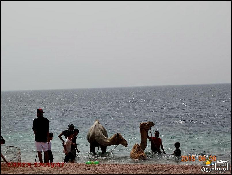 693455 المسافرون العرب رحلة غوص الى البحر الاحمر