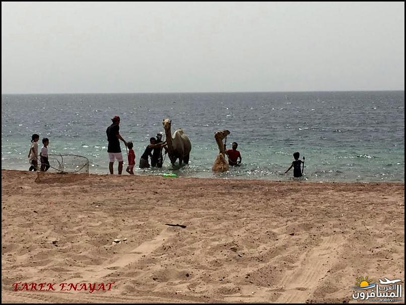 693456 المسافرون العرب رحلة غوص الى البحر الاحمر