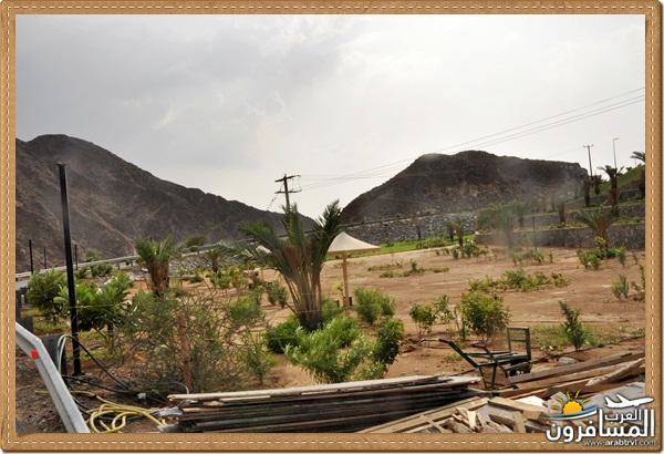 694544 المسافرون العرب وادي شوكة