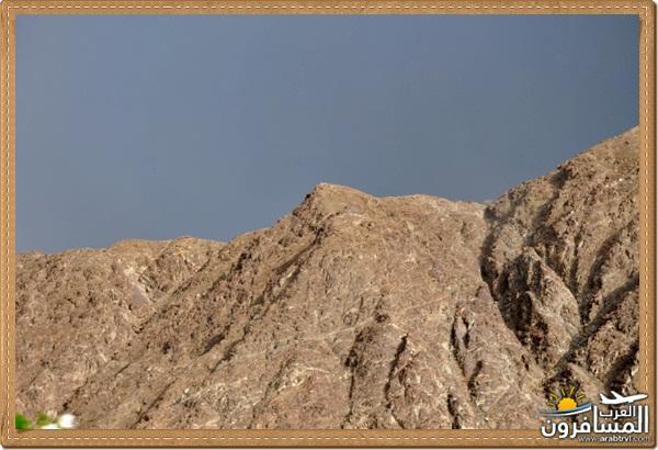 694548 المسافرون العرب وادي شوكة