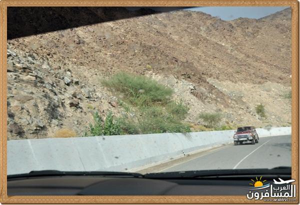 694550 المسافرون العرب وادي شوكة