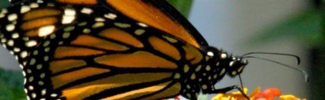 حدائق الفراشات