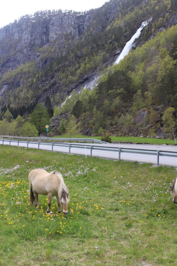 705449 المسافرون العرب تقرير رحلتي الى النرويج