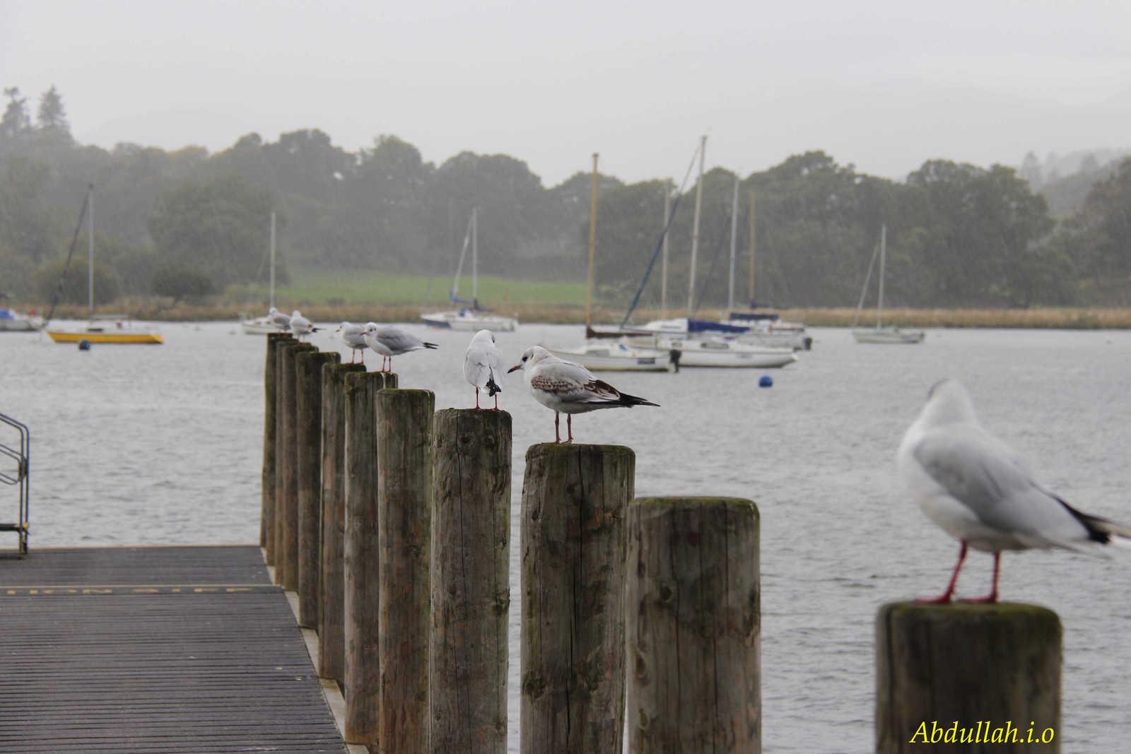 705795 المسافرون العرب منطقة البحيرات في أنجلترا .. the lake district