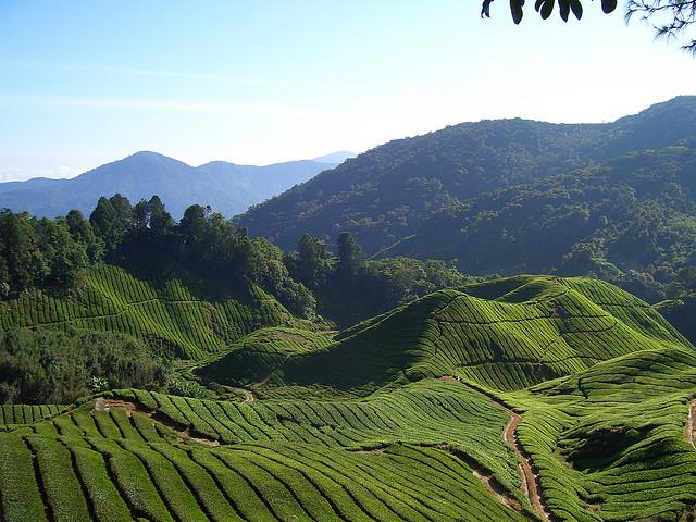 arab_travelers_malaysia_1395033304_439.jpg