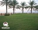 arab_travelers_tours_photo_1411223402_497.jpg