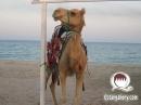 arab_travelers_tours_photo_1411223401_908.jpg