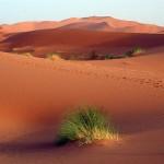 arab_travelers_tours_photo_1415334590_536.jpg