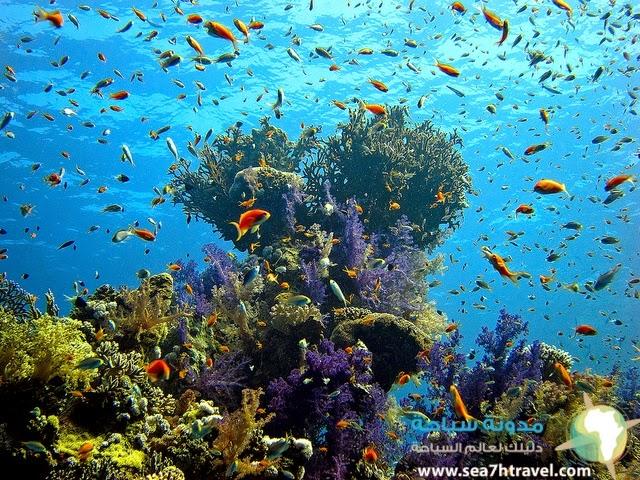 The-Red-Sea.jpg