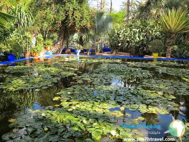 Majorelle-Garden.jpg