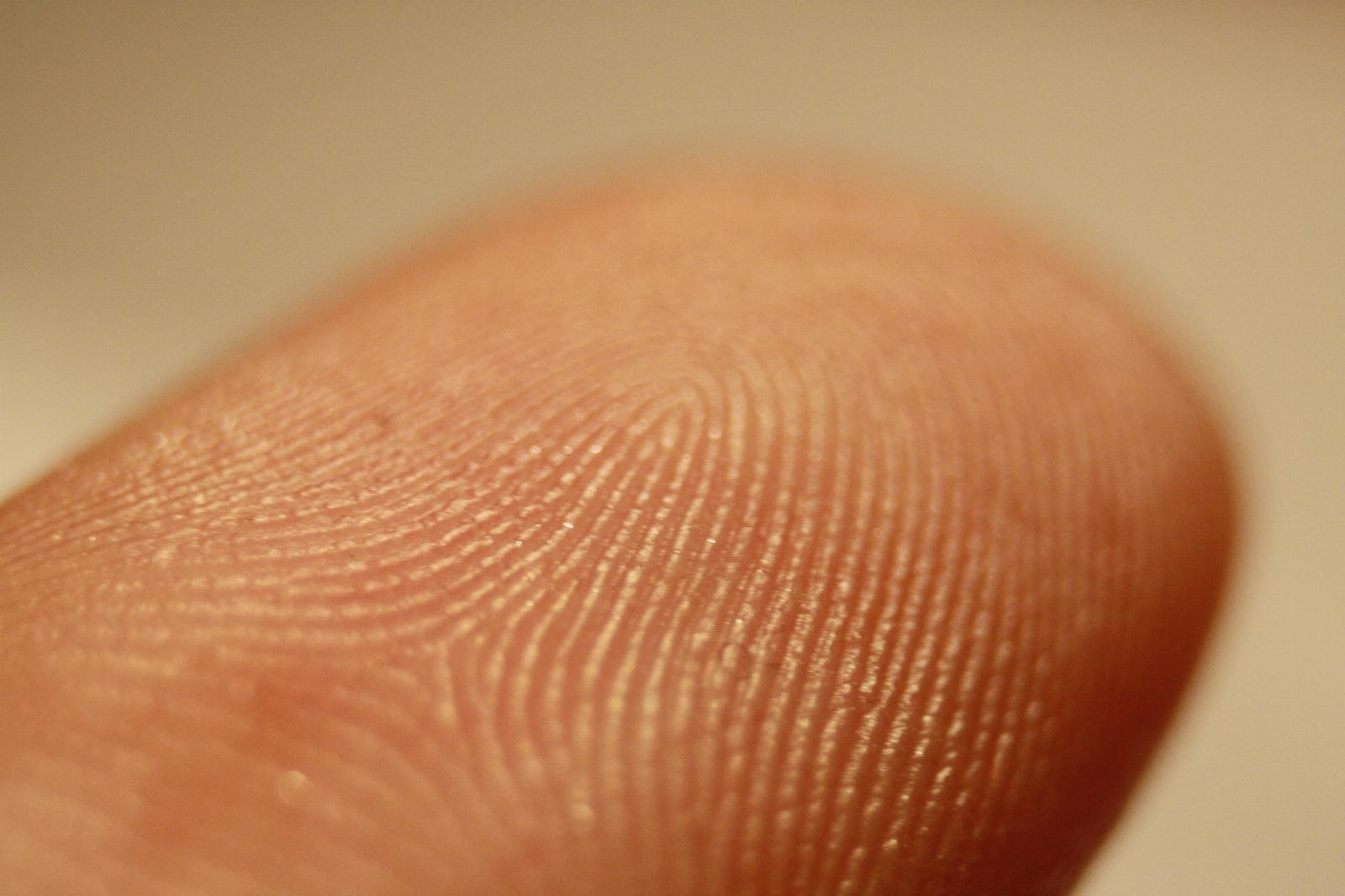 Fingerprint_detail_on_male_finger.jpg