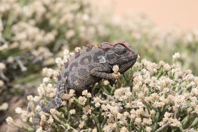 Desert-of-Namibia20.jpg