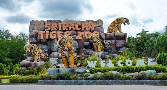 Sriracha-Tiger-Zoo.jpg