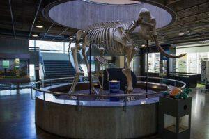 natural-history-museum-geneva-1-300x200.jpg
