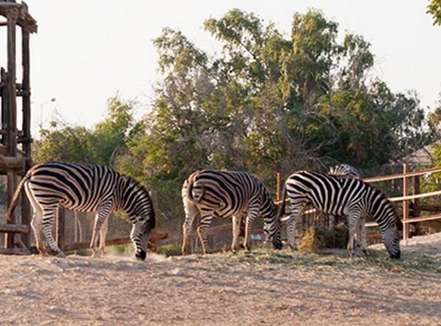 Qatar-Zoo-4.jpg