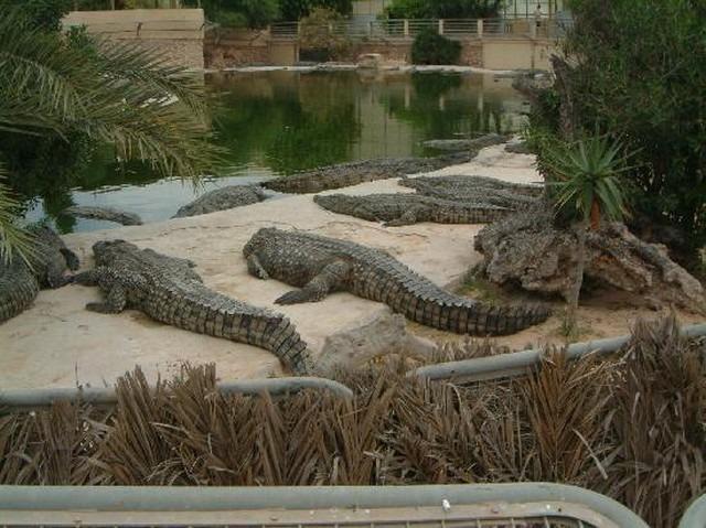Crocodile-Garden-Djerba-1.jpg