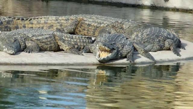 Crocodile-Garden-Djerba-31.jpg