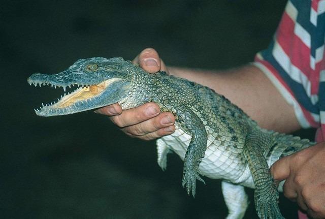 Crocodile-Garden-Djerba.jpg
