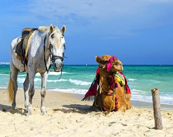 Hammamet-Beach-Rides.jpg