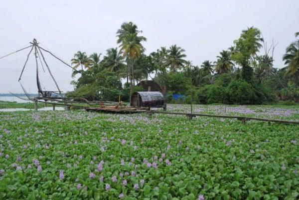kumbalangi-Kerala-e1459159126748.jpg