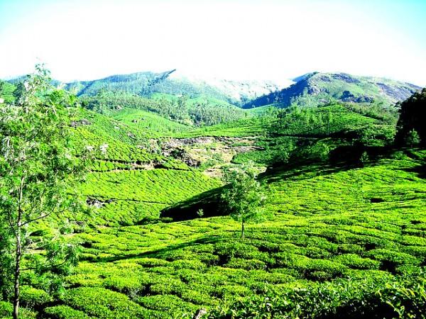 Munnar-area-e1459165131616.jpg