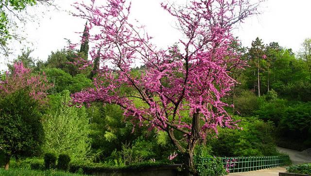 national-botanical-garden-of-georgia-tbilisi-1.jpg