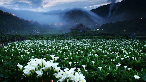 1.-Yangmingshan-National-Park.jpg