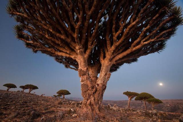 88002 المسافرون العرب جزيرة سقطرى