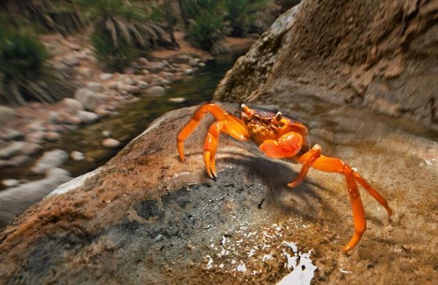 08-endemic-freshwater-crab-ipad-670.jpg