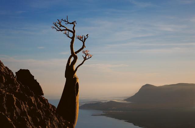 17-maalah-cliffs-desert-rose-670.jpg