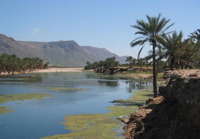 88031 المسافرون العرب جزيرة سقطرى