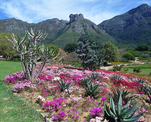 كرستنبوش - Kirstenbosch , المعالم السياحيه فى كيب تاون جنوب افريقيا صور 2014