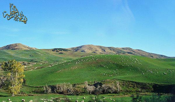 نيوزلندا Facebook: صور سياحيه من رحلتى الى نيوزلندا